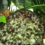 Зеленые нитчатые водоросли