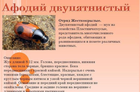 imagesnasekomye-zanesennye-v-krasnuju-knigu-krasnodarskogo-kraja-thumb.jpg