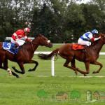 Лошади в истории и культуре