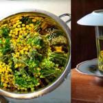Лечение пижмой обыкновенной, свойства травы