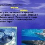 Пищеварительная система рыб