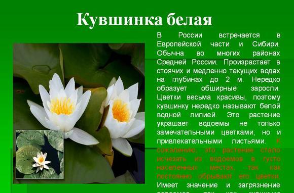 imageskuvshinka-krasnaja-kniga-thumb.jpg