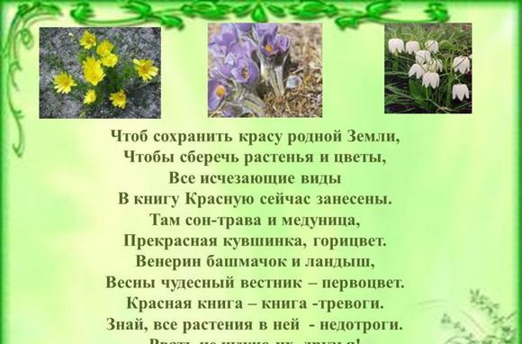 imagesredkie-rastenija-rostovskoj-oblasti-zanesennye-v-krasnuju-knigu-thumb.jpg