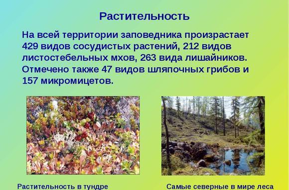 imagesukagi-mesto-gde-proizrastaet-lishajnik-thumb.jpg